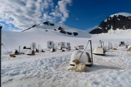 Dogs on a glaciar